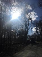 Tree-Care_06