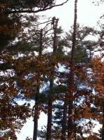 Tree-Care_10