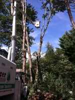 Tree-Care_17