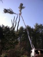 Tree-Care_23
