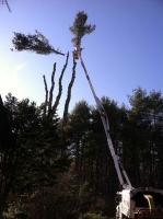 Tree-Care_18