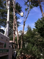 Tree-Care_20