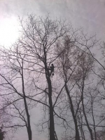 Tree-Care_24